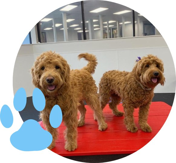 Two dogs inside The Pup Camp Daycare