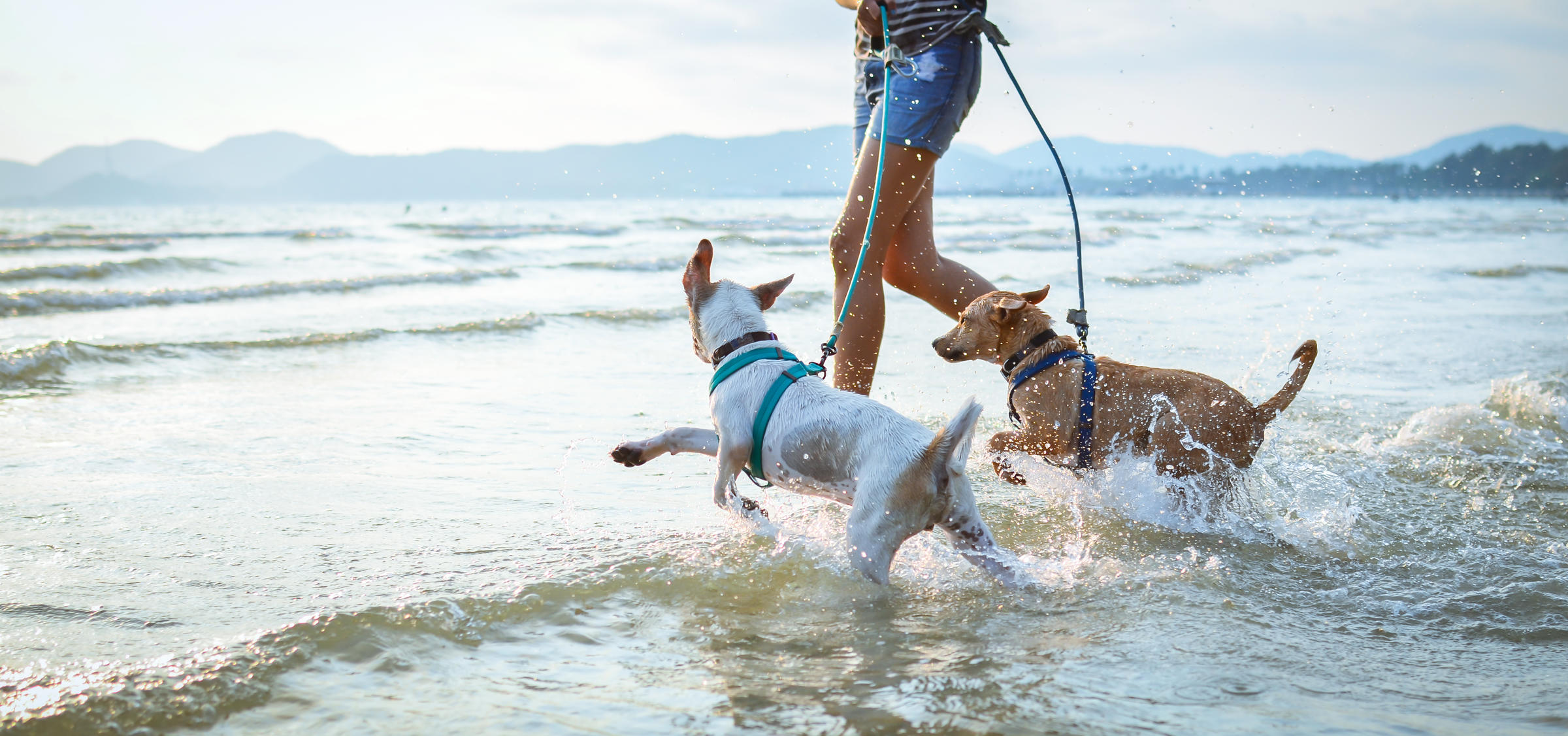 Two dogs playing at the beach